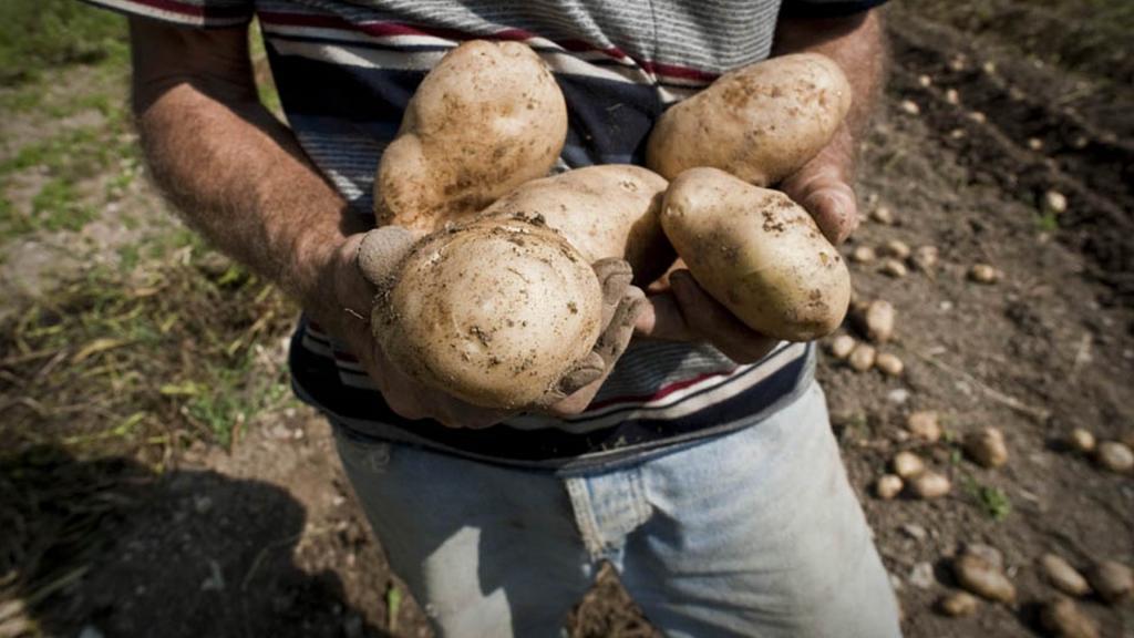 <b>Coltivatori</b> di cibo buono e sano
