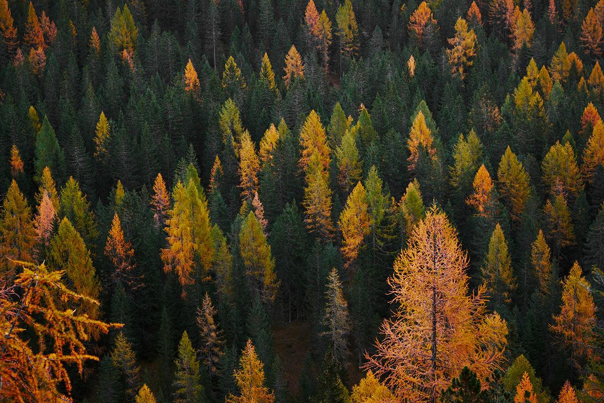 foliage-a-comano-dolomiti-trentino-in-autunno.jpg